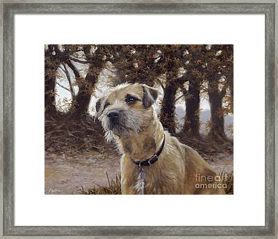 Border Terrier In The Woods Framed Print