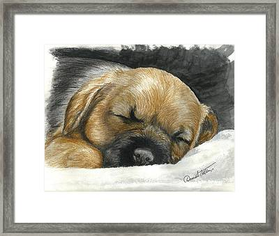 Border Terrier Puppy Nap Framed Print