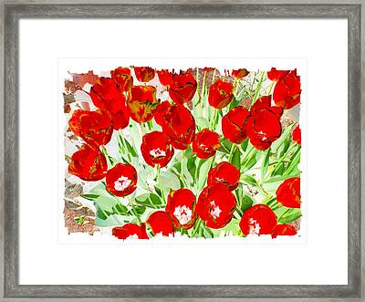 Bordered Red Tulips Framed Print by Will Borden