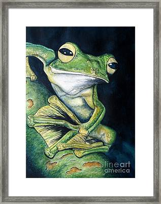 Boreal Flyer Tree Frog Framed Print by Joey Nash