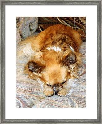 Bored Framed Print by Dorothy Berry-Lound