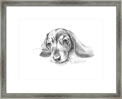 Bored. Little Dachshund Framed Print