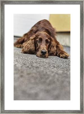 Bored Framed Print by Robert Krajnc