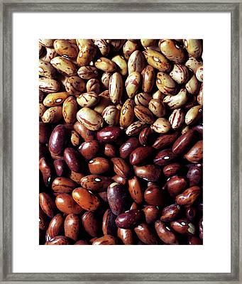 Borlotti Beans Framed Print
