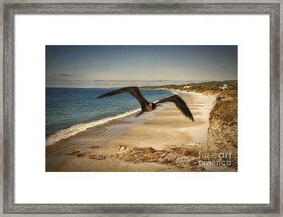 Born  Free  ... Framed Print
