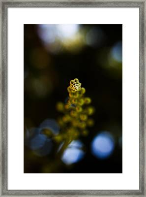 Born From Deep Framed Print by Mario Morales Rubi
