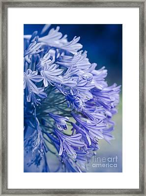 Born Into Colour Framed Print by Sharon Mau