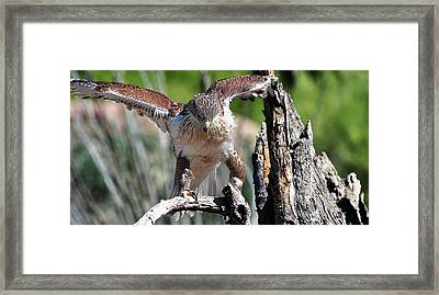 Framed Print featuring the photograph Born To Be Free by Barbara Manis
