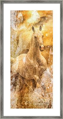 Born To Be Free Framed Print by Mo T