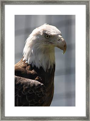 Born To Be Free Framed Print by Vadim Levin