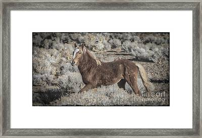 Born To Be Wild Framed Print by Mitch Shindelbower