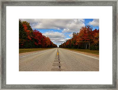 Born To Be Wild Framed Print by Rachel Cohen