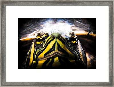 Born To Be Wild Framed Print by Yevgeni Kacnelson