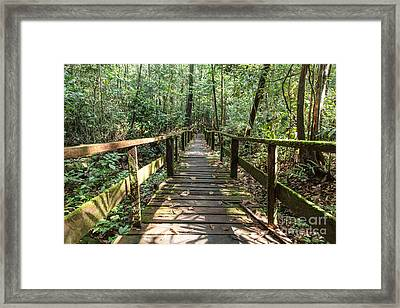 Borneo Jungle Framed Print