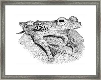 Borneo Red Flying Frog Framed Print