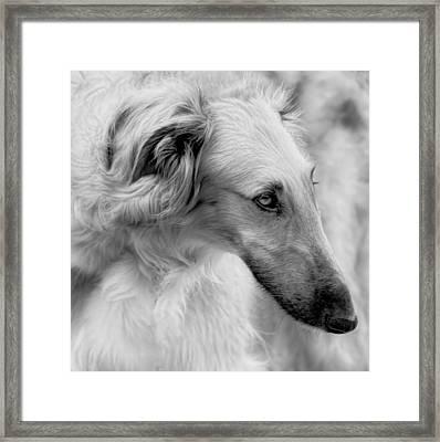 Framed Print featuring the photograph Borzoi Head Study by Charles Dana