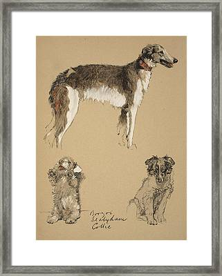Borzoi, Sealyham And Collie, 1930 Framed Print by Cecil Charles Windsor Aldin