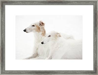 Borzoi Sight Hounds Framed Print by Christian Lagereek