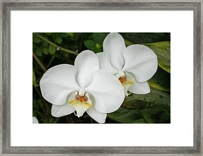 Bosom Blossoms Framed Print