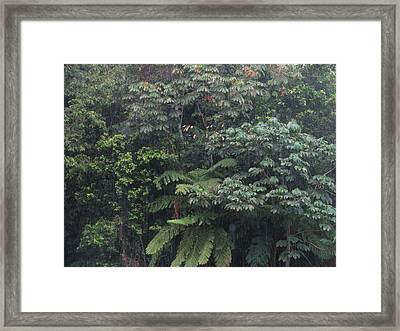 Framed Print featuring the photograph Bosque by Aurora Levins Morales