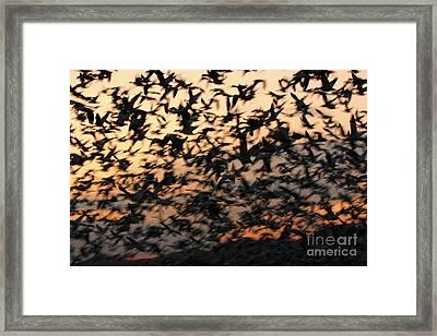 Framed Print featuring the photograph Bosque Sunrise Blastoff by John F Tsumas