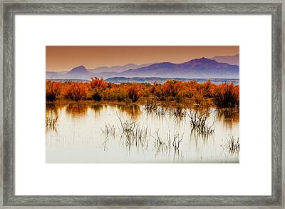 Bosque Framed Print by Carolyn Dalessandro