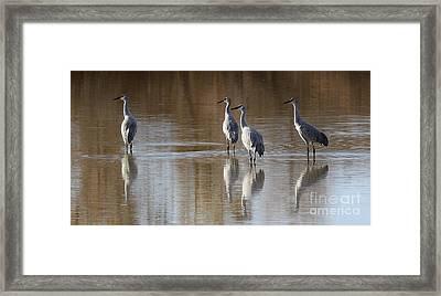 Bosque Del Apache Cranes Framed Print
