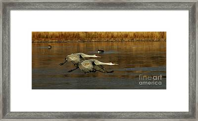 Bosque Del Apache Flight Formation Framed Print by Bob Christopher