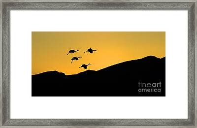 Bosque Del Apache Last Light Framed Print by Bob Christopher