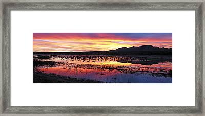 Bosque Del Apache Framed Print by Steven Ralser