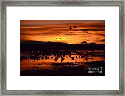 Bosque Del Apache Sunrise 1 Framed Print