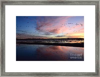 Bosque Del Apache Sunrise Framed Print