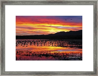 Bosque Sunset II Framed Print by Steven Ralser