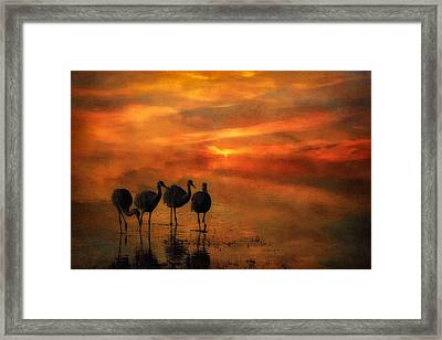 Bosque Sunset Framed Print by Priscilla Burgers