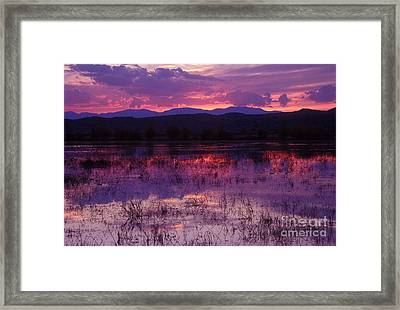 Bosque Sunset - Purple Framed Print