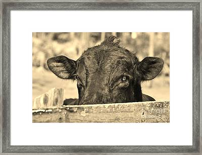 Boss Daddy Framed Print by Lynda Dawson-Youngclaus