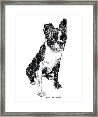 Boston Bull Terrier Framed Print