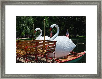 Framed Print featuring the photograph Boston Swans by Caroline Stella