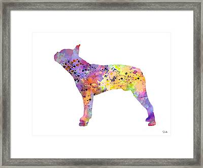 Boston Terrier 5 Framed Print