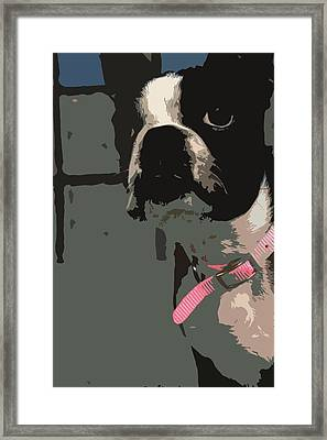 Boston Terrier Art01 Framed Print