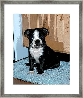 Boston Terrier Art02 Framed Print