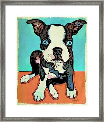 Boston Terrier - Blue Framed Print