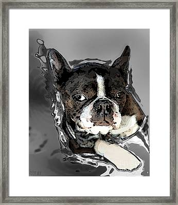 Boston Terrier.  Channeling Peter Lorre Framed Print by Peter Mix