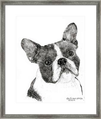 Framed Print featuring the drawing Boston Terrier by Jim Hubbard