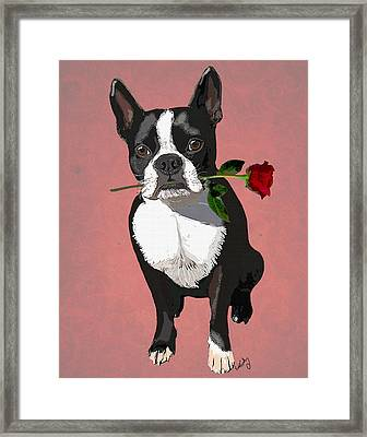 Boston Terrier With A Rose In Mouth Framed Print by Kelly McLaughlan