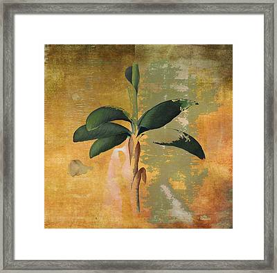 Botanical Banana Tree Framed Print