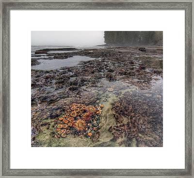 Botanical Beach Framed Print