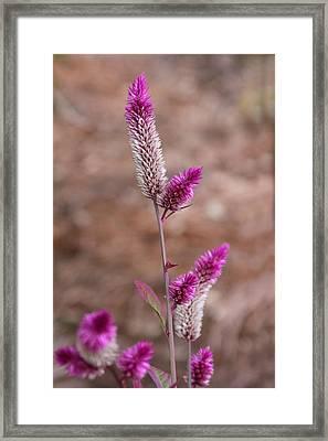 Botanical Bokeh Framed Print by Kandy Hurley