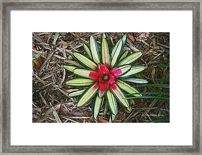 Framed Print featuring the photograph Botanical Flower by Tom Janca