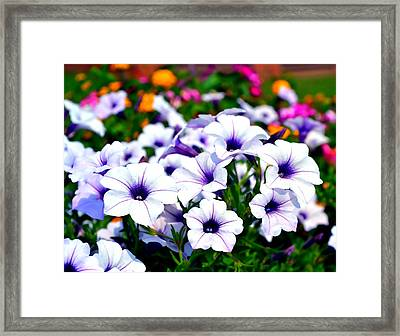Framed Print featuring the photograph Botanical Medley by Deena Stoddard
